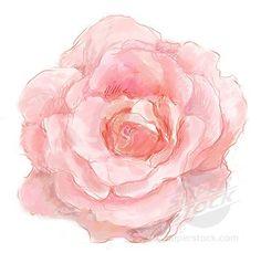 pastel pink flower