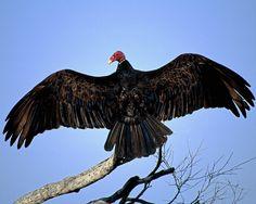 Bon Samedi - Voici 10 images d'oiseaux.  Merci de vos visites sur mon site. www.frawsy.com  Bonne fin de journée et bisous.