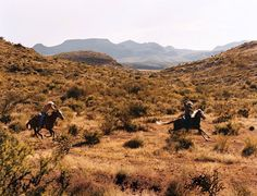 Herding cattle on Cibolo Creek, a 37,000-acre working longhorn ranch in West Texas. The property's plush 35-room inn allows guests to temper the cowboy experience with big city creature comforts
