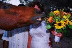 Horse photobomb, its actually so very possible