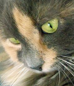 """""""[The cat] alone attains to the contemplative life."""" --Andrew Lang"""