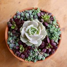 32 Nice Succulents Garden Ideas For Outdoor Decor - Succulents are perfect plants for dry gardens and are easy to root and grow. Once you learn how easy it is to propagate succulent plants. Diy Garden, Succulent Garden Design, Succulent Pots, Succulents Diy, Succulent Terrarium, Succulent Planter, Succulents, Plants, Succulent Garden Indoor