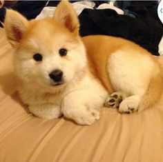 This little puppy is so adorable!