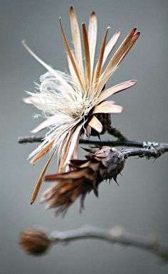 Seed Head by WombatTree - Gary Tree