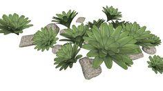 Plant and stones / Planta e pedras - 3D Warehouse
