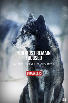 Your Must Remain Focused On your journey to greatness. http://www.gymaholic.co #gymaholic #fitness #motivation