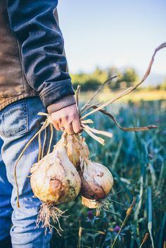 Dishing Up the Dirt - Farm To Table Recipes