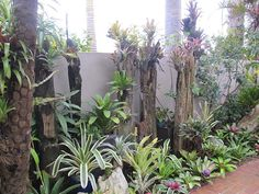 bromeliads by the walkway