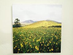 Mountain of Sunflowers with Monsoon Skies  https://squareup.com/market/oceans-of-wisdom-photography