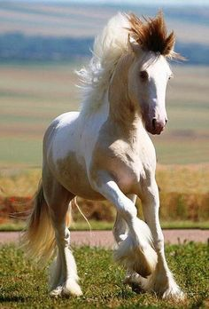 llbwwb:    For the horse lovers:) by Cowboy.