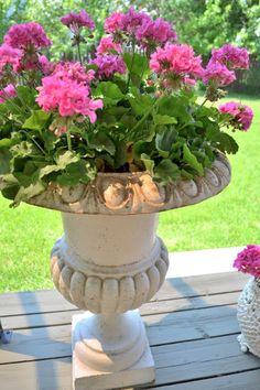 Such a pretty Urn filled with pink geraniums Garden Urns, Garden Planters, Container Flowers, Flower Planters, Farm Gardens, Outdoor Gardens, Summer Flowers, Beautiful Flowers, Pink Geranium