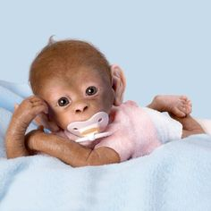 Coco So Truly Real Baby Monkey Doll by Ashton Drake