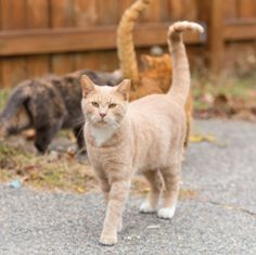 Trap-Neuter-Return Effectively Stabilizes and Reduces Feral Cat Populations - Alley Cat Allies