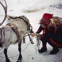 Kvinne med reinsdyr i sameleir. | Flickr - Photo Sharing!