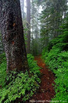 Forest Trail by La-Vita-a-Bella - Meena's Tirith