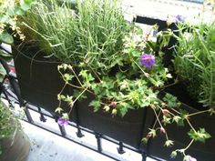 Bacsac plantenzakken (Jardiniere Accroché) om op te hangen, verkrijgbaar in verschillende maten bij Trendyard, zie http://www.trendyard.nl/nl/kweken/urban-farming/plantentassen-voor-balkon-and-terras