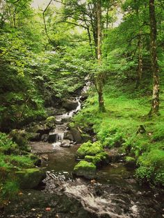 Isle of Mull, Scotland. Photo by Tree Porn. I would love to just spend hours exploring places like this. I need to go to Scotland! Or at least visit Oregon again, lol