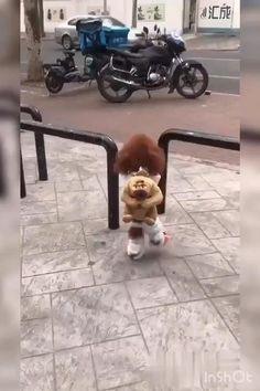 Cute Animals Images, Cute Animal Videos, Cute Little Animals, Funny Animal Jokes, Funny Animal Pictures, Cute Funny Dogs, Cute Funny Animals, Funny Parrots, Funny Dog Videos