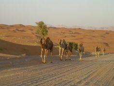 surviving the african desert