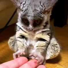 Cute Little Animals, Cute Funny Animals, Cute Cats, Big Cats, Funny Looking Animals, Cute Wild Animals, Funny Owls, Cute Animal Videos, Cute Animal Pictures