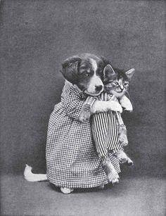 Vintage pet photo