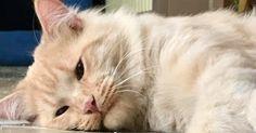 Abandonné deux fois, ce chat était très triste jusqu'au jour où tout a changé