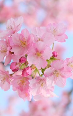 Imagem de flowers, nature, and wallpaper