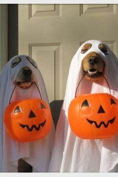 "seasonalwonderment: ""Happy Halloween! """