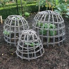 These charming, rustic style Willow Cloches are not only an attractive addition to any garden, but also provide protection for your garden plants from wind damage, birds and other pest attack Willow Garden, Garden Basket, Veg Garden, Vegetable Garden Design, Garden Trellis, Garden Art, Veggie Gardens, Garden Crafts, Garden Projects