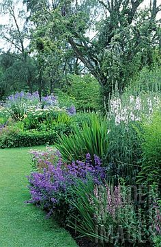YMO_GIP0092926- BORDER OF PERENNIAL BLUE : ASTER, CROCOSMIA : Asset Details -Garden World Images