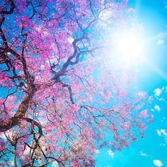 primavera.jpg (600×600)