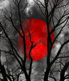 "Black White Yellow Moon Tree Wall Art Home Decor Matted Picture (Options) / color ""splash"" Black White Red, Black And White Pictures, White Art, Color Splash, Color Pop, Red Pictures, Nature Pictures, Red Images, Splash Photography"