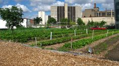 Detroit Gives Go-Ahead to Controversial Urban Farm Project | Planetizen