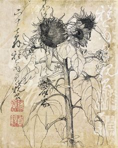 Elena Ray : License Images www.elenaray.com ||| sunflower flower drawing asian japanese chinese calligraphy mixed media art