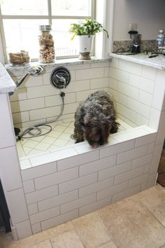 a doggie bath!  LOVE!