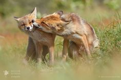K-k-k-k-k-k-KISS! (Foxy Love) by Roeselien Raimond on 500px