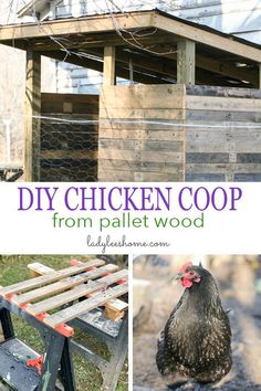 How to Build a Chicken Coop From Pallet Wood Cheap Chicken Coops, Chicken Coop Pallets, Backyard Chicken Coop Plans, Backyard Poultry, Building A Chicken Coop, Chickens Backyard, Chicken Pen, Chicken Coup, Chicken Life