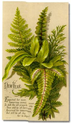 Birthday Expected for Ever Green Ferns Embossed Victorian Card C Victorian Flowers, Vintage Flowers, Victorian Era, Plant Illustration, Botanical Illustration, Victorian Christmas, Celtic Christmas, Christmas Christmas, Vintage Christmas