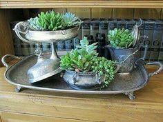 Sukkulenter - - put houseplants in old antique silver pieces Indoor Garden, Garden Art, Indoor Plants, Outdoor Gardens, Garden Design, Herb Garden, Potted Plants, Succulents In Containers, Planting Succulents
