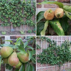 fruitleibomen