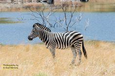 Axel Mertens Photography | African Wildlife III