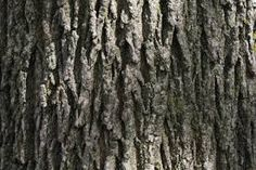 Image result for natural textures