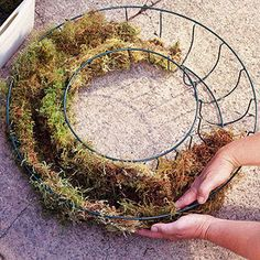 Plant a Living Wreath Tough, drought-tolerant succulents are a perfect way dress up gates, fences, walls, and doors. To create a living wreath like the one shown . Air Plants, Garden Plants, Indoor Plants, House Plants, Succulent Gardening, Planting Succulents, Container Plants, Container Gardening, Terrarium Cactus