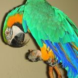 From tricks to teaching not to bite to what is good and what is not good for your parrots!  http://www.birdtricks.com/talking-trial/sileena1