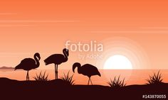 "Download the royalty-free vector ""Vector illustration of flamingo on riverbank at sunset"" designed by kongvector at the lowest price on Fotolia.com. Browse our cheap image bank online to find the perfect stock vector for your marketing projects!"