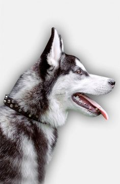 Choose elegant design for Husky everyday collar and express your style through the style of your pet.  Three colors available!