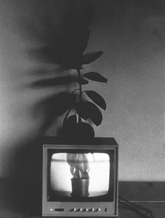 Ernst Caramelle Video-Landschaft (Blumentopf), 1974 Video Landscape (flowerpot)
