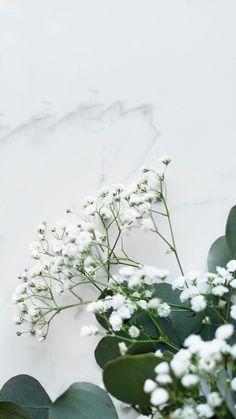 ❀✰ @ashxleyg ✰❀ Free Phone Wallpaper, Iphone Background Wallpaper, White Wallpaper, Aesthetic Iphone Wallpaper, Aesthetic Wallpapers, Plant Wallpaper, Flower Wallpaper, Whatsapp Wallpaper, Minimalist Wallpaper