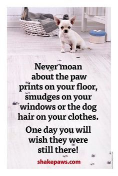 Never moan about the paw prints on your floor, smudges on your windows or the dog hair on your clothes. One day you will wish they were still there. #truestory #dogsarelife #heartofdogs