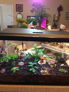 Terrarium aquarium with LED lights and some mini African Violets..from Trish Gordon Facebook page: House Plants...Great idea!